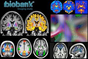 جلسه دوم از سلسله جلسات وبینار آزمایشگاه ملی نقشه برداری مغز