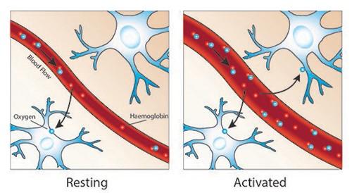 افزایش سطح اکسیژن محلی در اطراف محل فعالیت نورونی