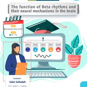 The Function of Beta Rhythms and their Neural Mechanisms in the Brain